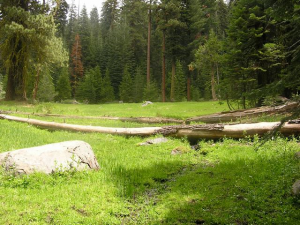 stanislaus-forest