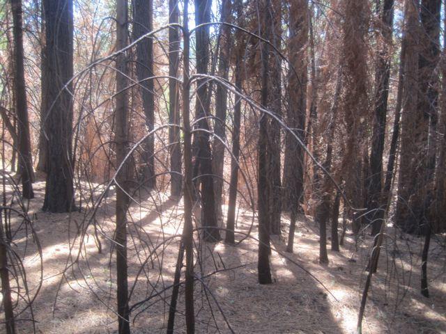 Rim Fire Picture 4